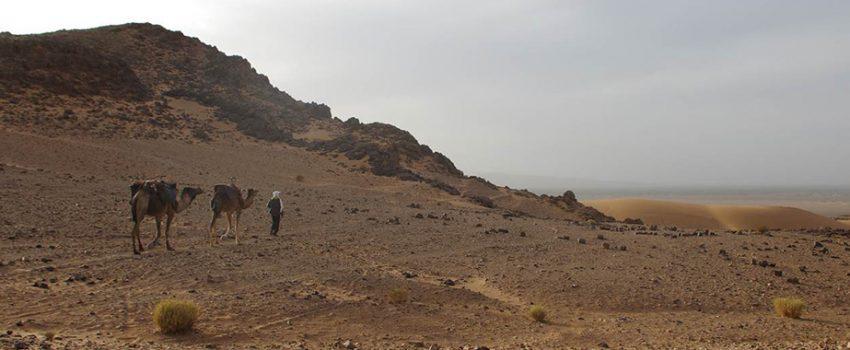 DESERT TOUR from marrakech TO ZAGORA