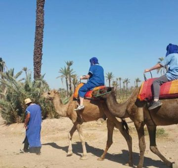 Camel ride in Marrakech palm grove